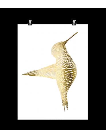 Boas Grafik Billede kolibri