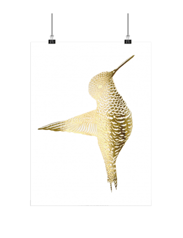 Boas Grafik Plakat kolibri