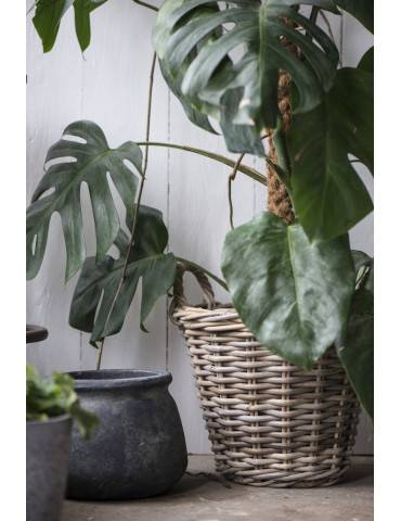 Ib Laursen kurv i rattan med past indvendigt og plante