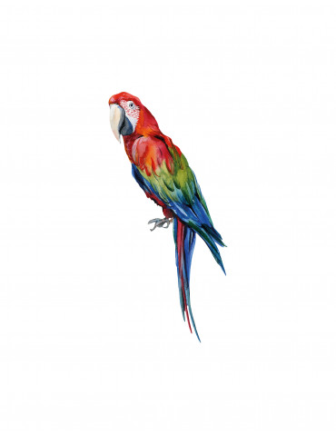 Thats Mine wallsticker Manuel the parrot