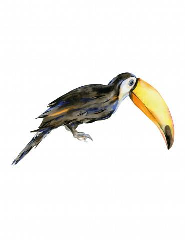 Thats mine wallsticker raft the toucan